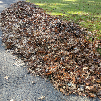leaf pile instagram